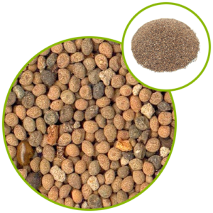 Dodder Seed Extract