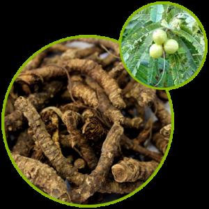 Kutki Extract (Picrorhiza Kurroa)