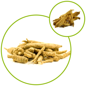 Ginseng Panax Extract