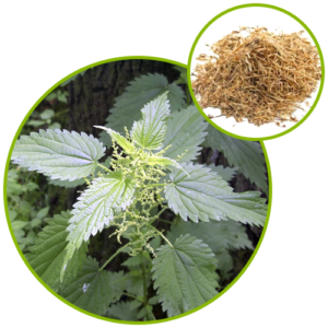 Nettle Sting Root Extract