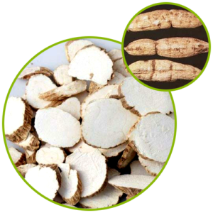 Trichosanthes Root Extract