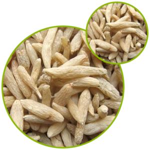 Ophiopogon Japonicus Extract