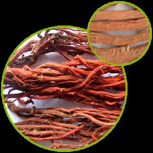 Salvia Radix Extract