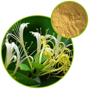 Chlorogenic Acid-honeysuckle Flower Extract