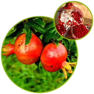 Pomegranate Extract Punicalagin A + B Ellagic Acid