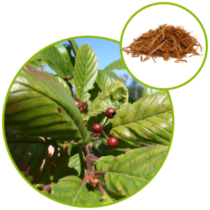 Rhamnus Purshiana Bark Extract
