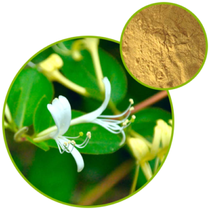 Honeysuckle Flower Extract Chlorogenic Acid