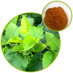 Mulberry Leaves Extract 1-DNJ