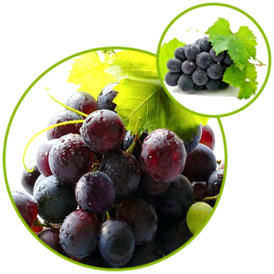 Resveratrol-Grape Skin Extract