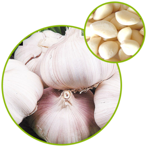 Garlic Extract Allicin