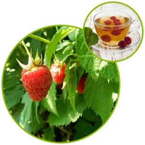 Raspberry Leaf Extract