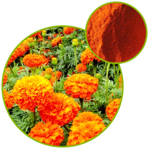 Marigold Extract Lutein
