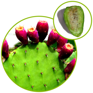 Pear Cactus Extract