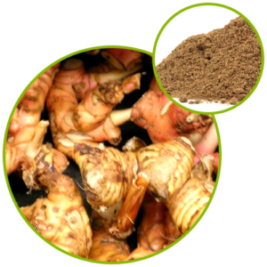 Galangal Root Extract