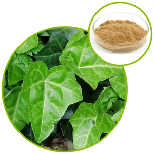 Hedera helix Extract IVY