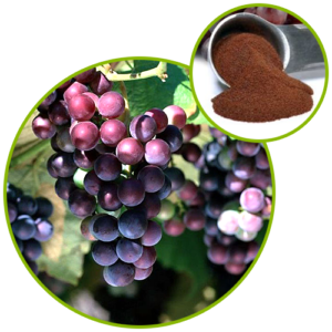 Grape Skin Extract Polyphenols