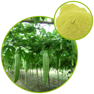 Bitter Melon Extract Powder