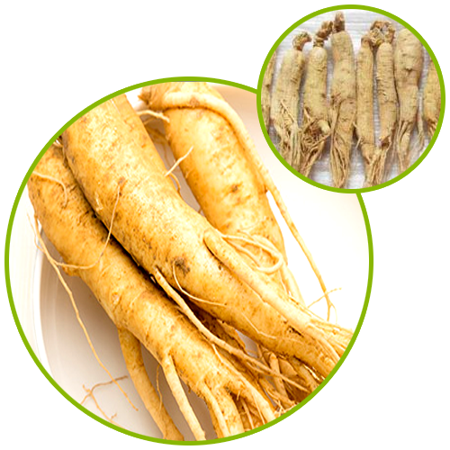 American Ginseng Root Extract Ginsenosides