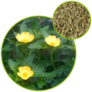 Bienfaits Griffonia Simplicifolia - dépression : traitement pour se débarrasser des troubles anxieux